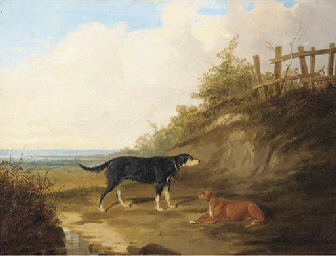 Dogs in an extensive landscape