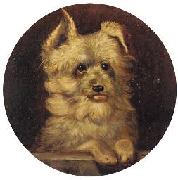 Grip, a terrier