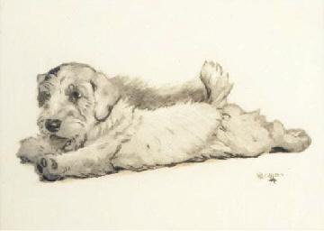 A mischevious puppy