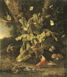 A forest floor still life with
