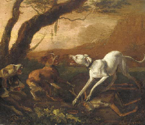 Dogs fighting ovar a dead stag