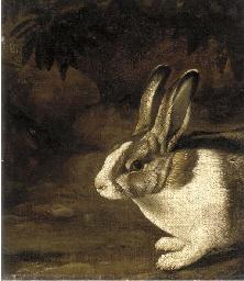 A rabbit in a rocky undergrowt