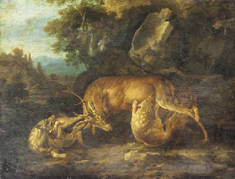 Two wolves attacking a stag in