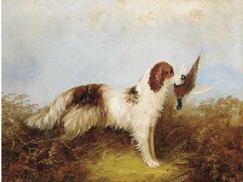 A gun dog with a pheasant