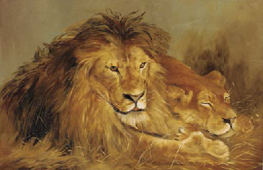 A lion and lioness lying in th