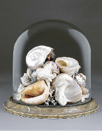 A collection of specimen sea shells