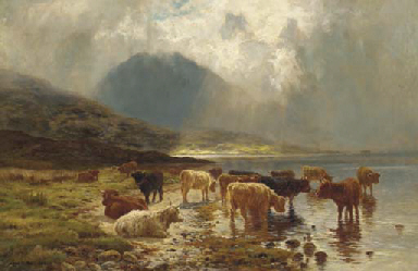 Highland cattle watering by a