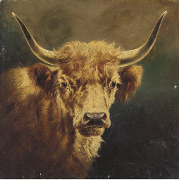 The head of a Highland cow
