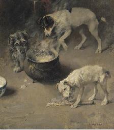 Three dogs at a cauldron