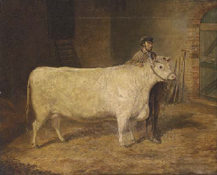 Purity, a prize cow