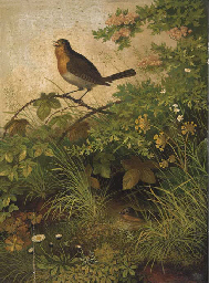The singing Robin