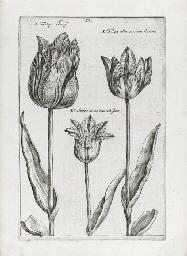 PASS, Crispin van de (1589-167