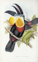 GOULD, John. A Monograph of the Ramphastidae, or Family of Toucans...
