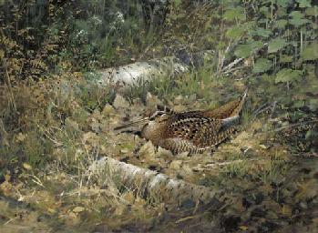 Woodcock, amongst silver birch