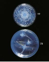 Tokio, an opalescent glass box