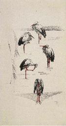 (14) Vijf ooievaars in de wei