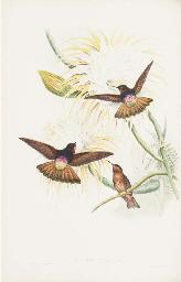 GOULD, John (1804-1881) and Richard Bowdler SHARPE (1847-1909). A Monograph...