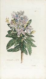 MEERBURGH, Nicolaas (1734-1814
