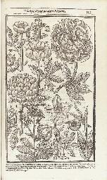 PARKINSON, John (1567-1650). P
