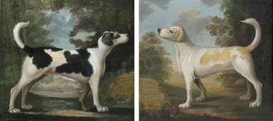 Venus and Painter, two hounds