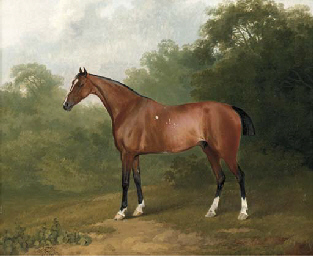 A bay horse in a wooded landsc