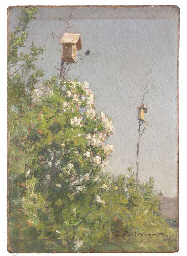 Nesting Boxes above flowering
