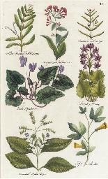 The British Herbal: Seven Plat