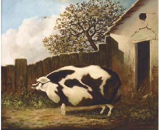 A sow in a farmyard
