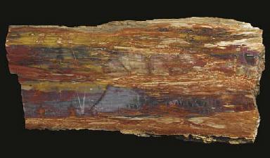 A petrified wood table top