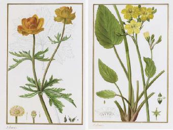 A Group of Botanical Studies