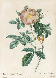 Les Roses: Six Plates