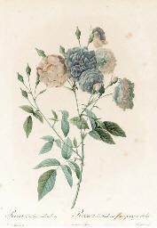 Les Roses: Eight Plates; Adèla