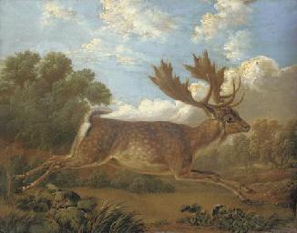A fallow deer leaping across a