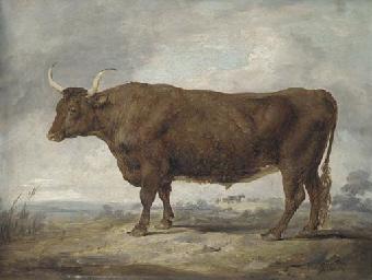 Portrait of an ox in a landsca