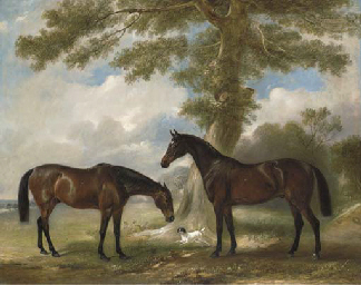 Two bay mares with a terrier b