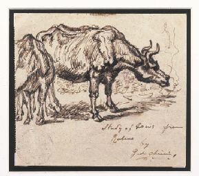 Studio per un toro (da Rubens)