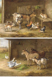 Goats, a rabbit and chickens i