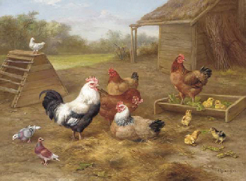 A cockerel, chickens and doves