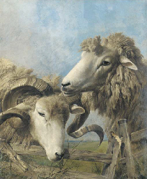 Heads of a sheep and a ram