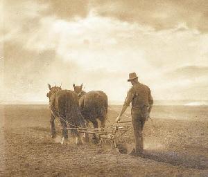 The Ploughman, Windsor
