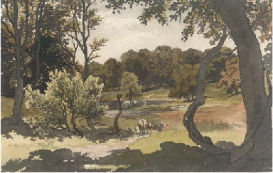 Cows grazing in a wooded lands