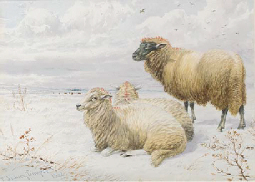 Sheep resting in the snow