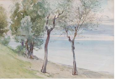 Trees on the coast at Baveno