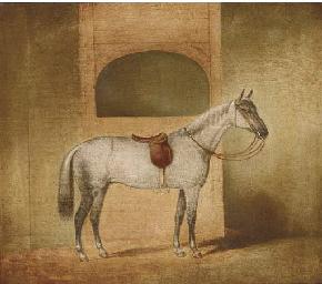 A saddled dapple grey in a sta
