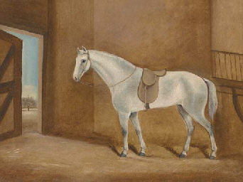 A saddled grey in a stable