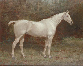 Launcelot, a grey horse