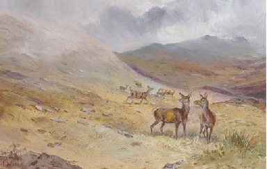 Hinds on a moor