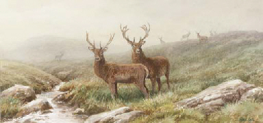 Stags on a moor