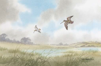Snipe and woodcock in flight
