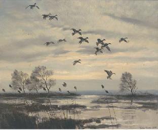 Mallards gliding in recto; and